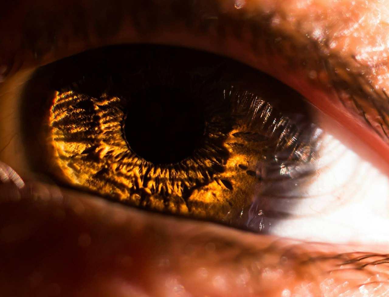 barna szem napfenyben makro.jpg